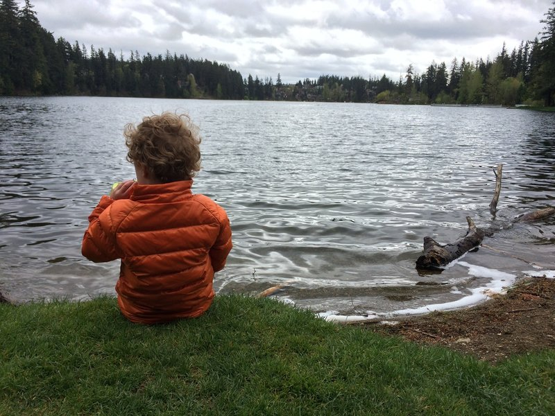 Picnic lakeside at Lake Wilderness.
