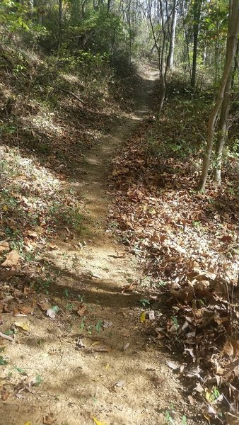 Most of the trail looks like this.