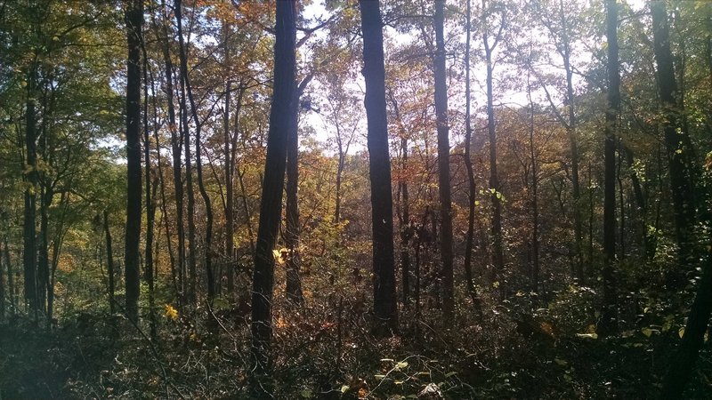 Beautiful Paynetown woods.