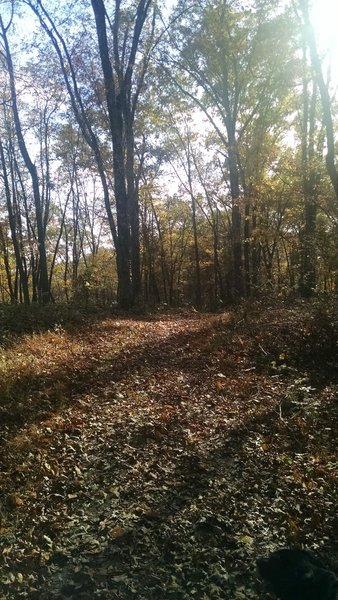 Pate Hollow Trail.