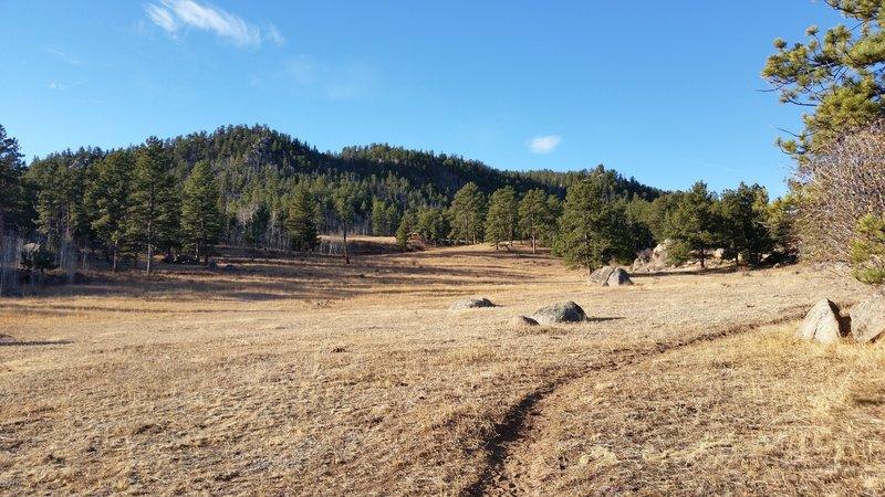 Pretty meadow on the Molly Moon Trail near the Lady Moon trailhead.