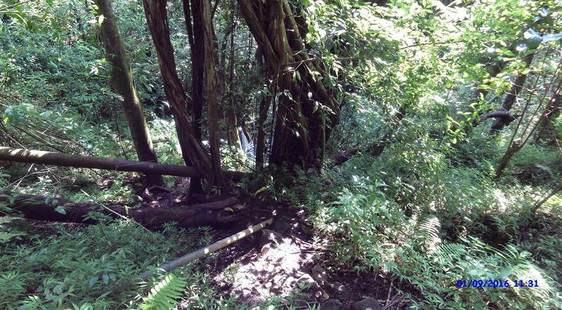 One of the waterfalls through the brush.