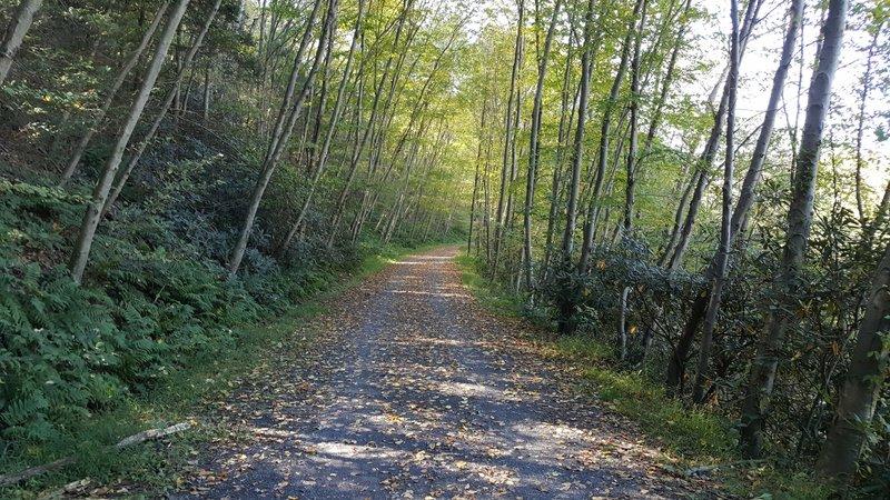 Part of Schuylkill River Trail In Hamburg PA