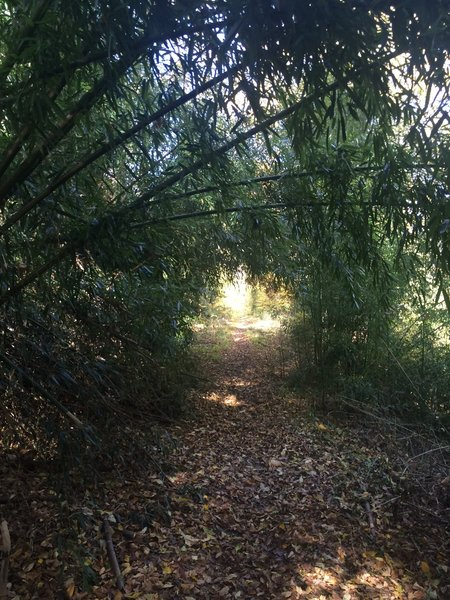 A short bamboo tunnel.