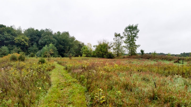One of the grassy sections of the trail.