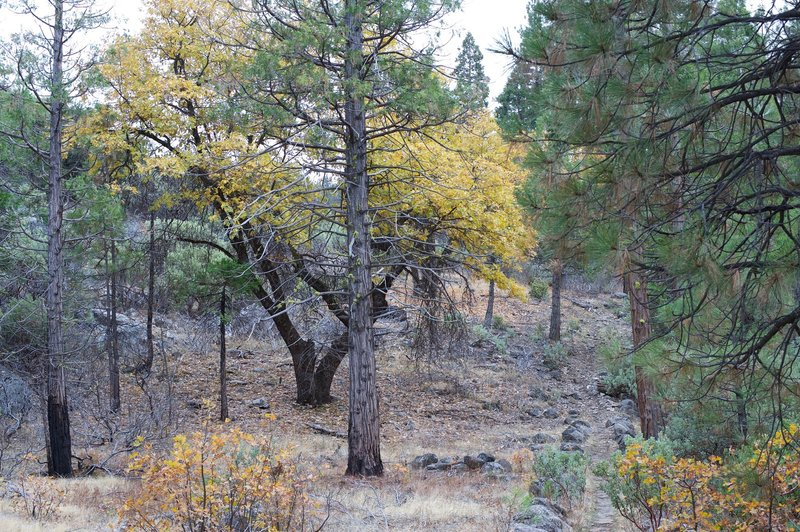 In the fall, you can see the leaves changing color, as well as evidence of the Rim Fire.