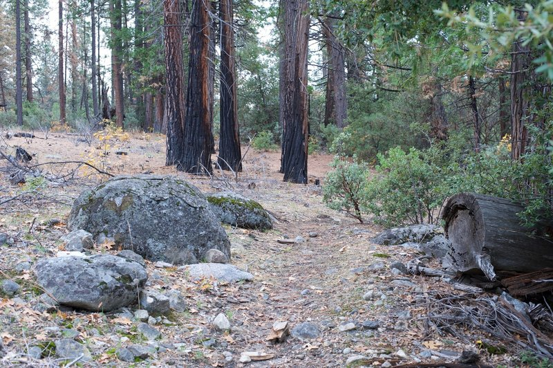 The trail is rocky as it works its way uphill. You can see where the trees burned in the fire.