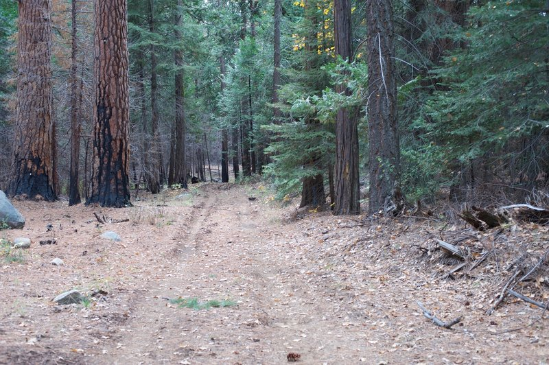 The Camp Mather Trail is a wider road in this area that you can follow back into the National Forest.