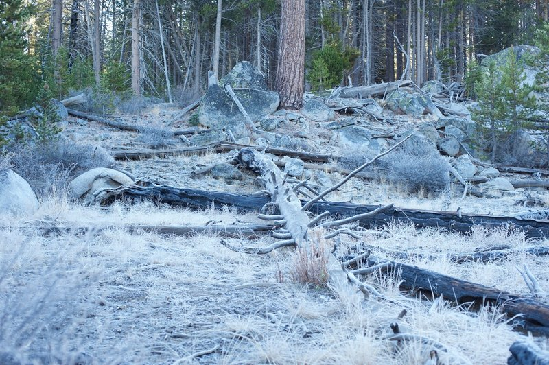 In the fall, frost covers the ground and trees.
