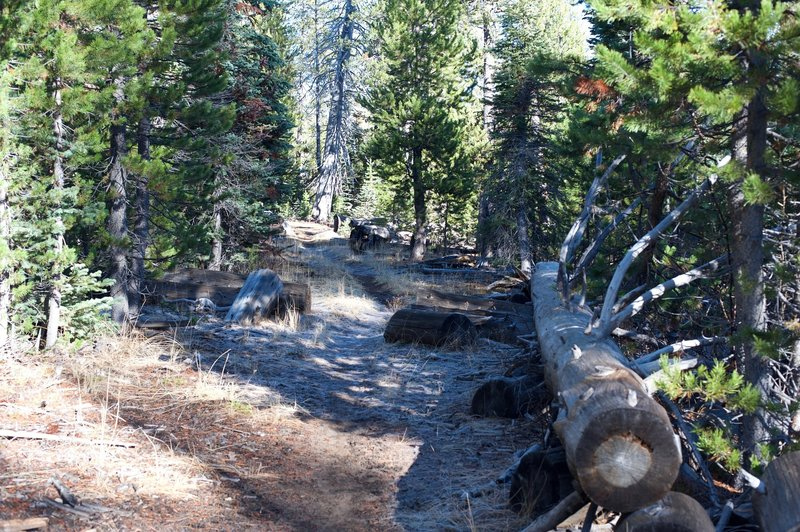 The trail as it makes its way back to Bridalveil Creek.
