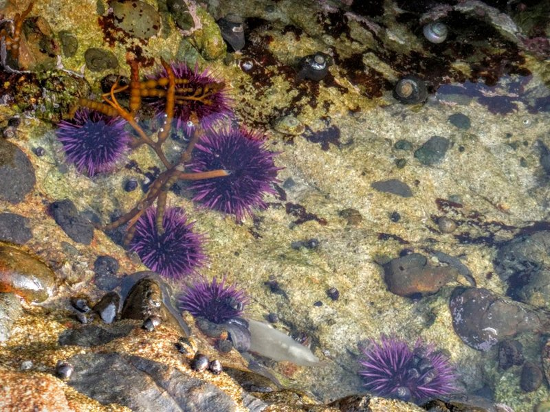 Tidal pool at Point Lobos.