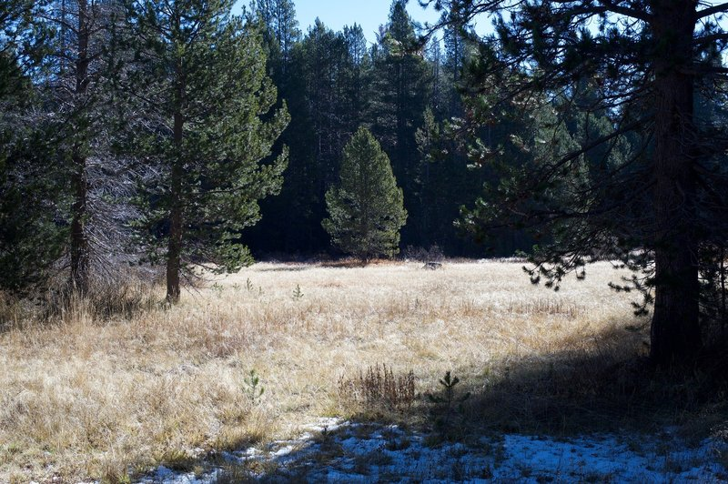 A meadow sits off to the left side of the trail where deer can be seen feeding in the early morning or evening.