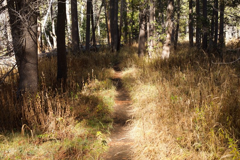 The trail is narrow as it makes its way through the forest. The trail is mainly dirt at this point.