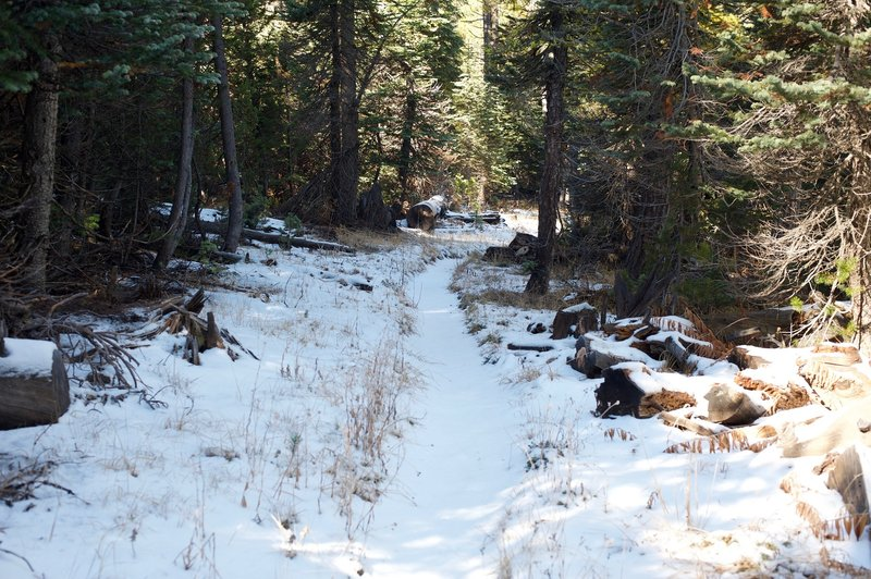 Snow covers the trail in shaded sections of the forest. Watch your step as there might be ice underneath, making it slippery.