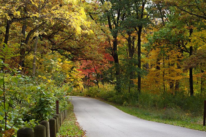 Morton Arboretum road in the fall.