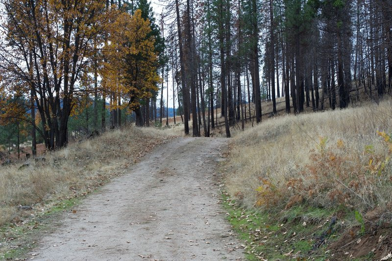 The trail is an old road that leaves the Foresta community and makes its way to the falls.
