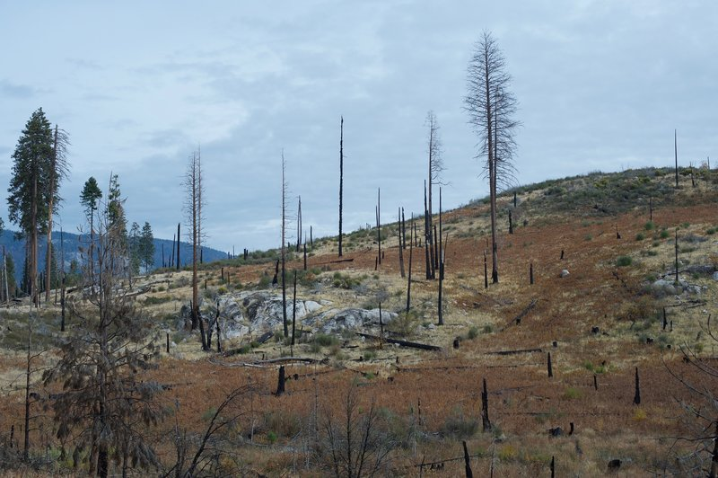 Evidence of the El Portal Fire in 2014 can be seen on the surrounding hills.