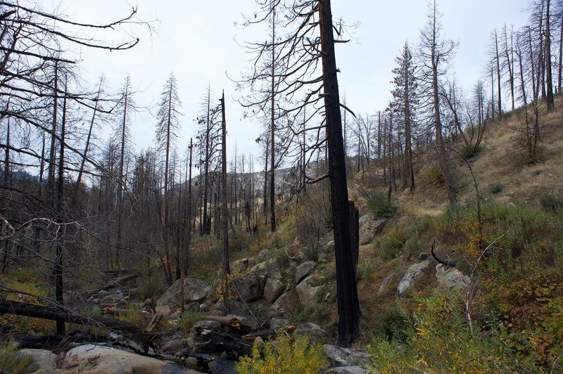 The area below the falls is littered with burnt and damaged trees from the El Portal fire.