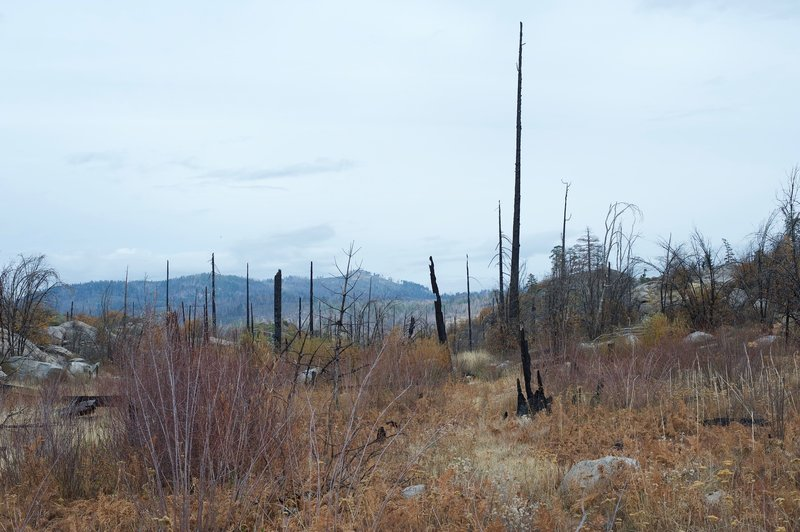 The trail narrows further and can be overgrown in the fall. Evidence of the Rim Fire can be seen throughout the area.