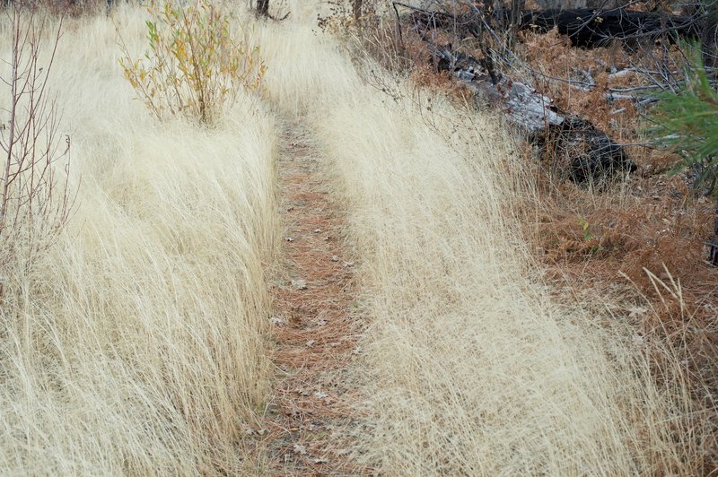 The trail passes through a flat, grassy area before the final climb to the top.