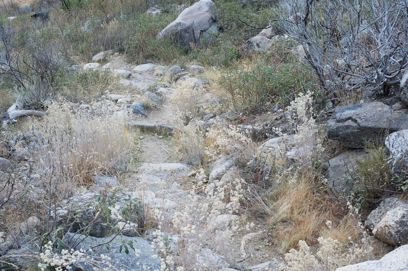The trail that climbs the gully is rocky and overgrown.