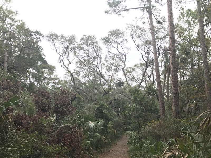 Some of the trees along the trail.