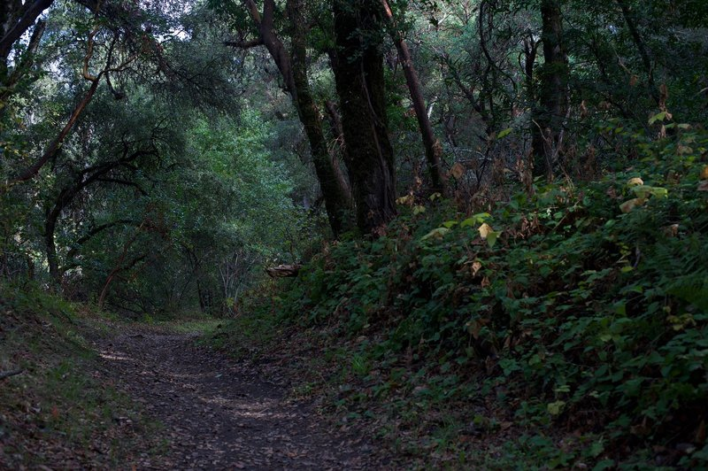The trail as it climbs up a small hill after passing the Coal Road Trail split.