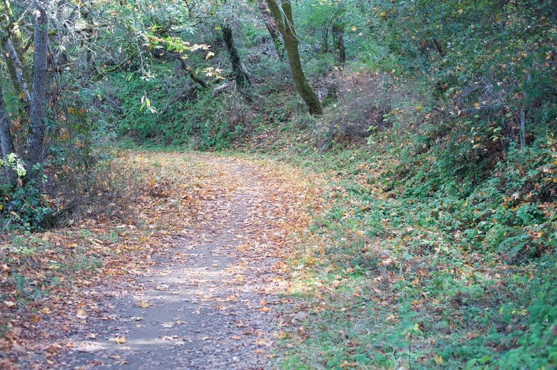 Leaves cover the trail in fall as the leaves change color and fall.