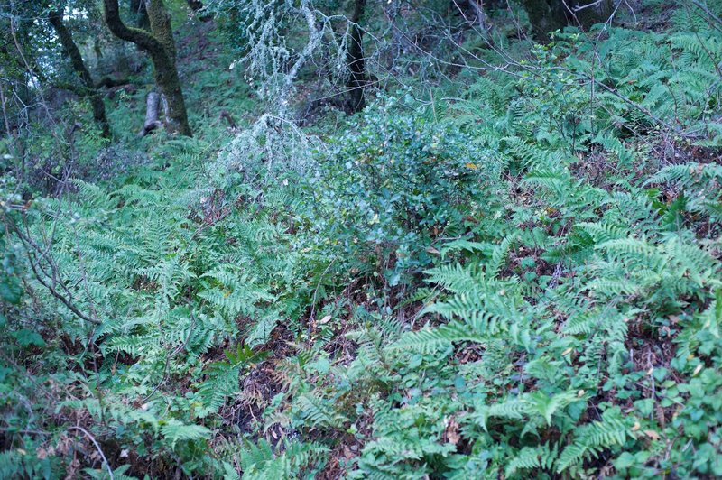 Ferns line the side of the trail.