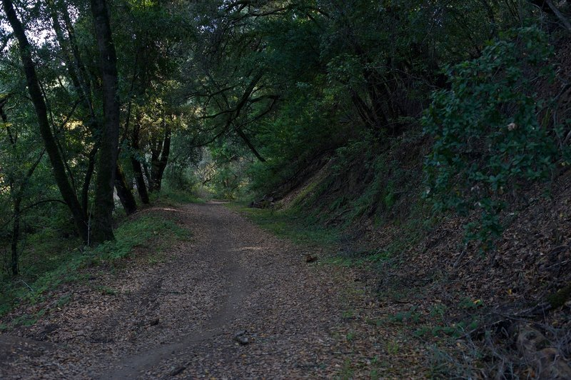 The trail is wide through this section, which is nice as it allows room for mountain bikers to pass.