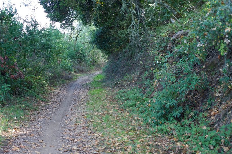While the trail is wide as it follows the old road, you can see the area that is most popular with cyclists.