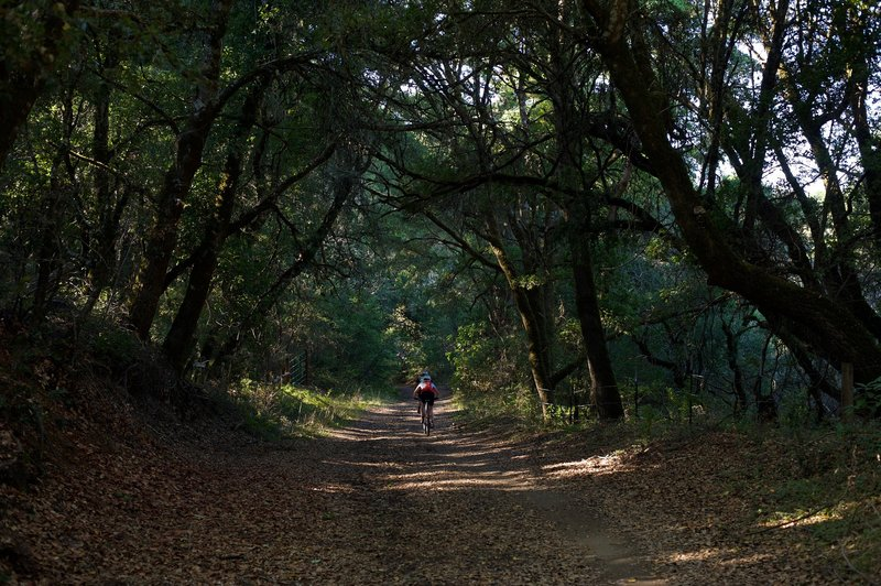 Mountain bikers ride down the trail along Alpine Road. It is popular with mountain bikers.