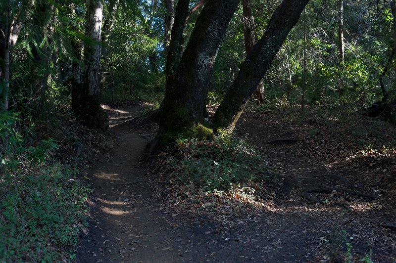 At several points in this section of the trail, it splits around trees in the path. You can take either fork as they both end up in the same point.