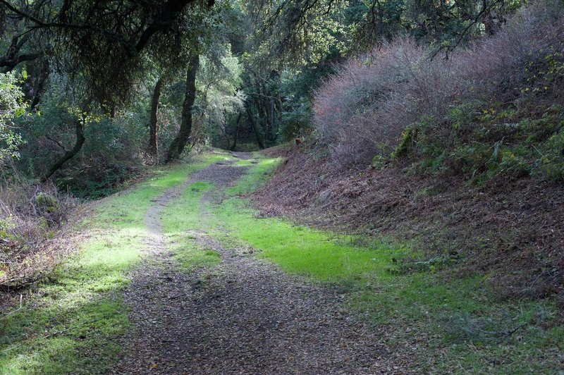 The trail begins to ascend up the mountain, but the dirt, grass, and leaves make for pleasant going.