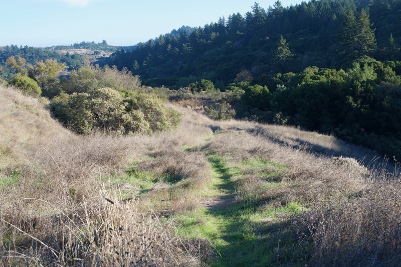 The trail narrows as you descend toward the pond, and the grasses begin to encroach upon the trail.