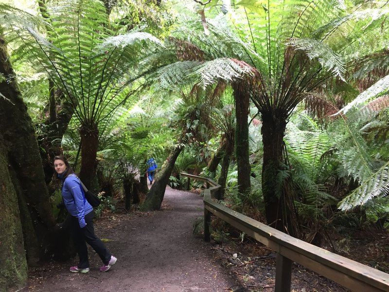 Walking through the tree ferns.