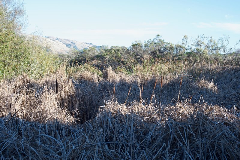 When you reach the pond, it appears to have dried up, and the cattails and grasses are all that are left.