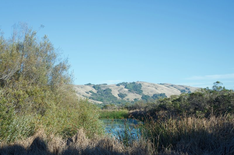 Looking over the grasses, you can see the water that remains in the pond in the distance, as well as the surrounding hills of the Monte Bello Preserve.