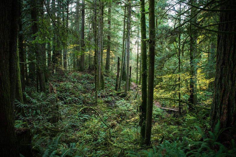 Lush forest surrounds the trails at the Stimpson Family Nature Reserve.
