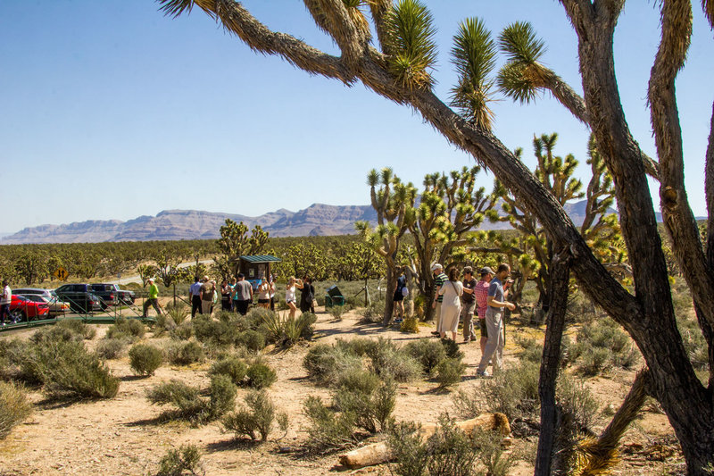 Gateway to historic Arizona Grapevine Mesa Joshua Tree Forest