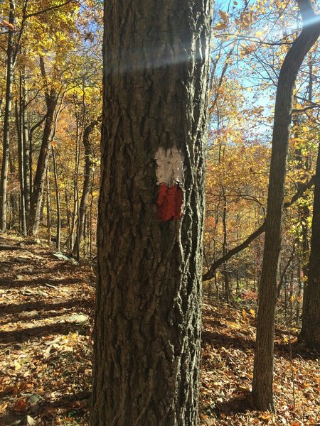 Red and white blazed section of the trail.