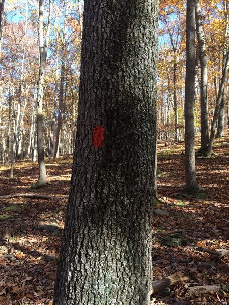 Red blazes of this section of trail.