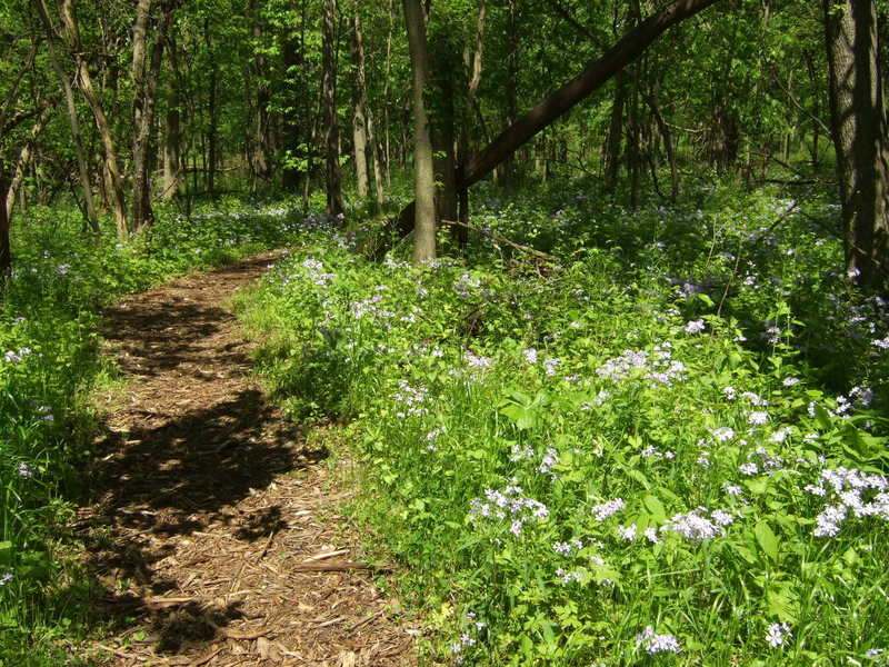 Flowers line the edge of the Prairie Creek Woods Trail. Photo credit: USDA Forest Service.
