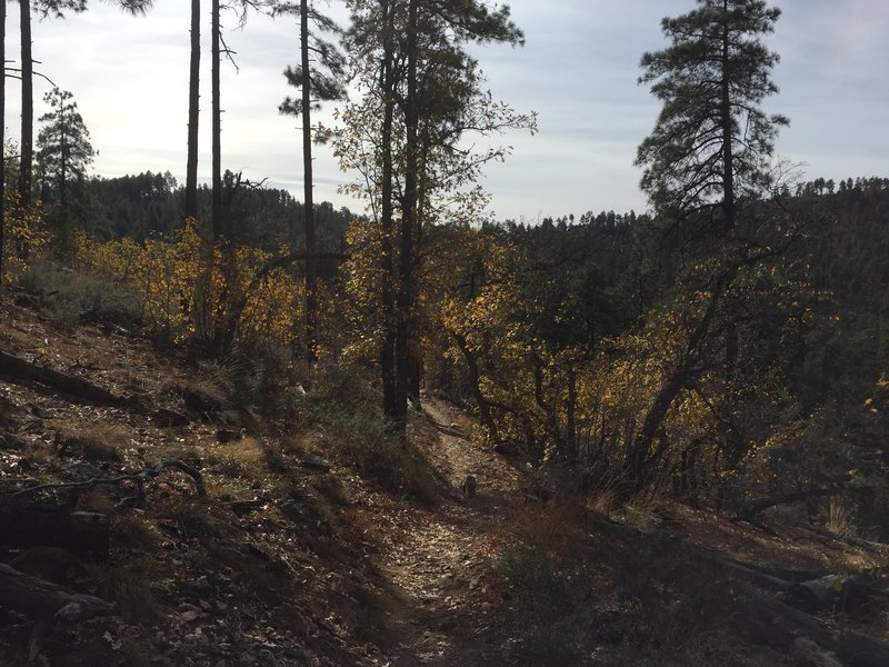 Cold Springs Trail is an easy-to-follow trail.