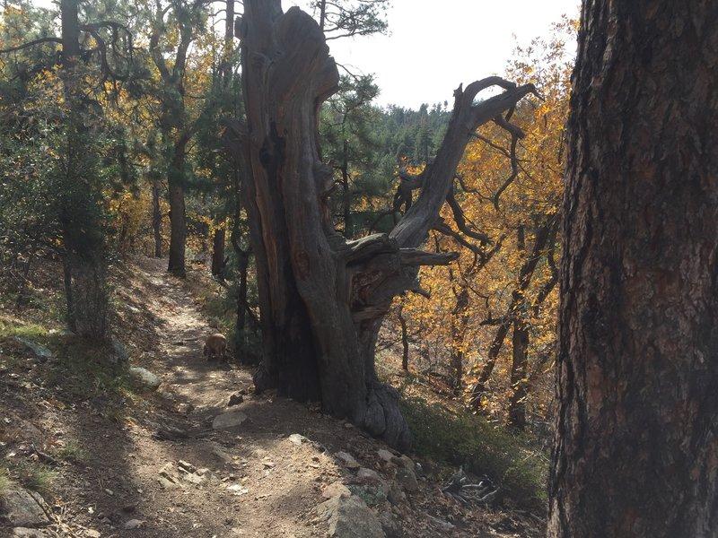 Pretty tree stump.