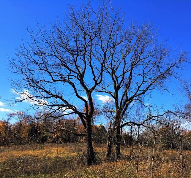 Tree in Six Mile Run.