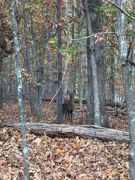 A curious trail mate...