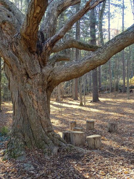 Greeting Tree at trailhead.