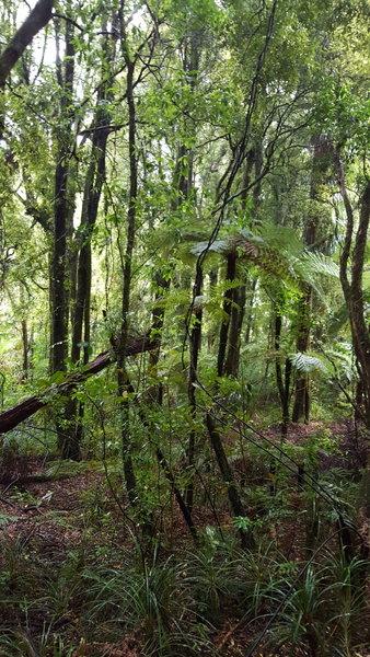 Beautiful greens of the native bush.