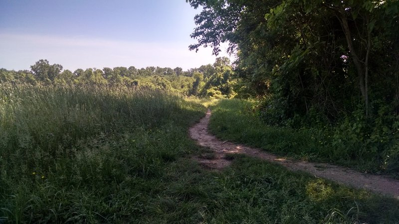 Whitely Farms singletrack.